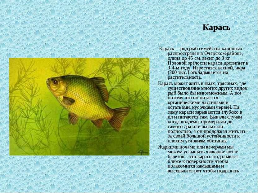 Карась Карась— род рыб семейства карповых распространён в Очерском районе, дл...
