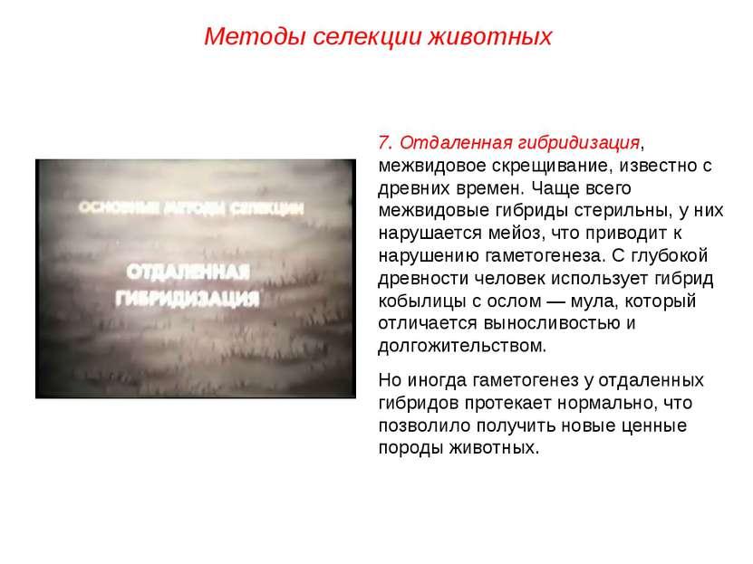 Методы селекции животных 7. Отдаленная гибридизация, межвидовое скрещивание, ...