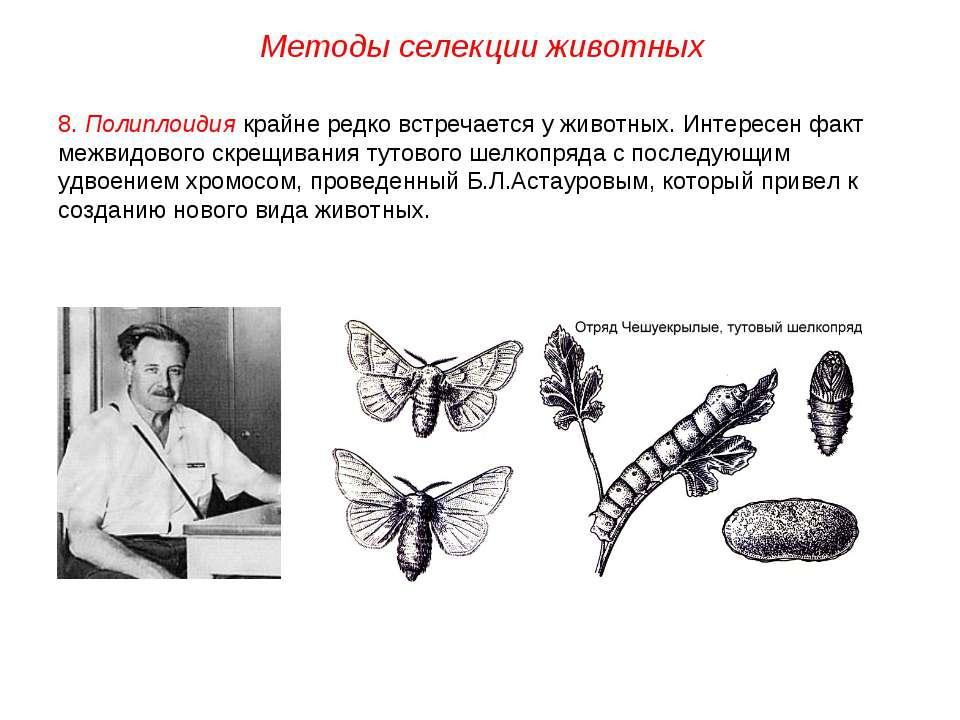 8. Полиплоидия крайне редко встречается у животных. Интересен факт межвидовог...