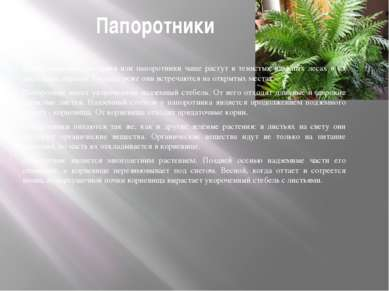 Папоротники Папоротниковые растения или папоротники чаще растут в тенистых вл...
