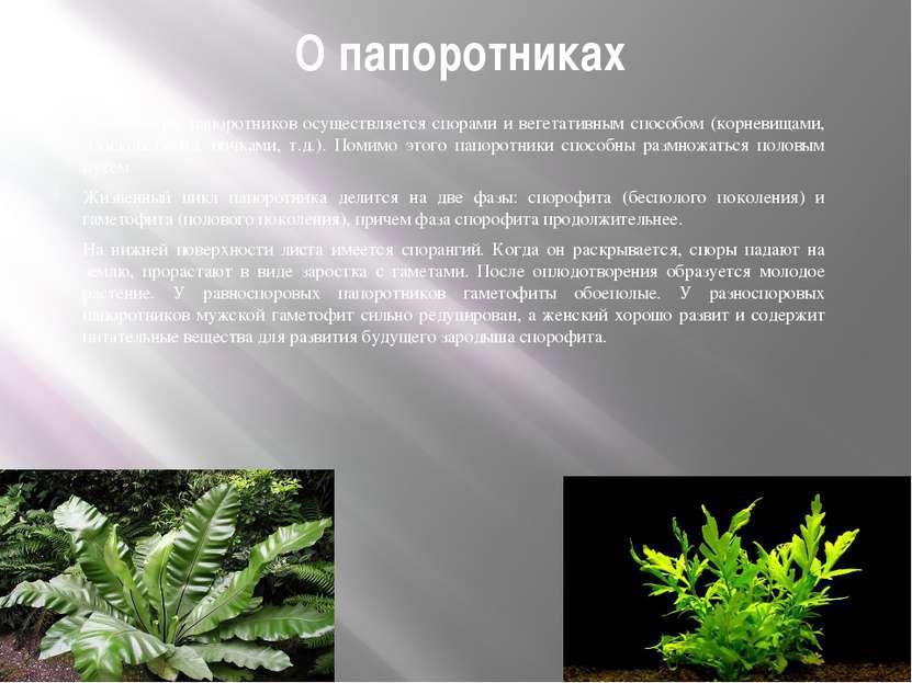 О папоротниках Размножение папоротников осуществляется спорами и вегетативным...