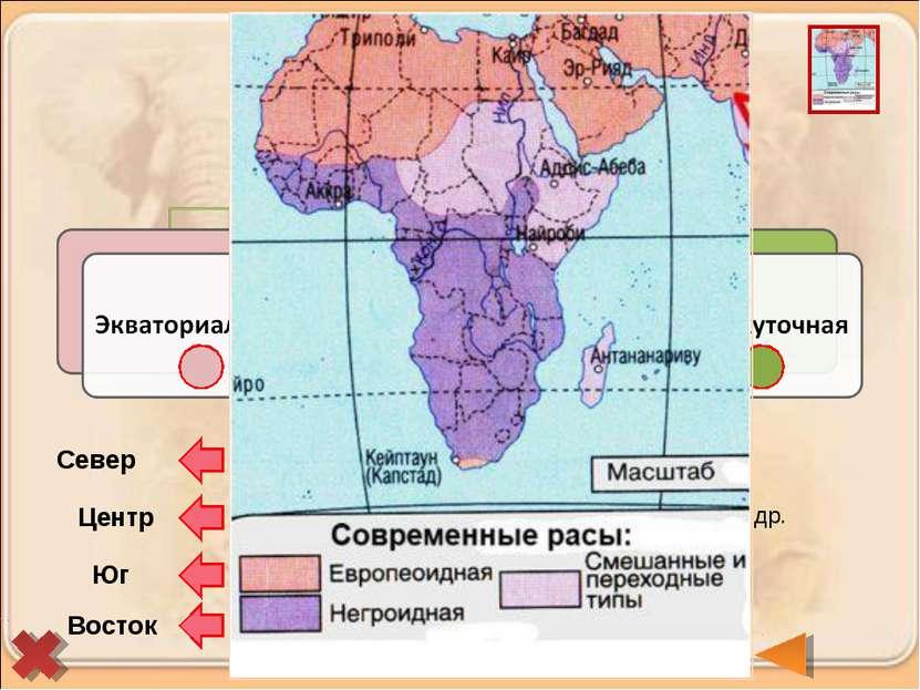 Берберы и арабы (туареги, алжирцы, египтяне) Бушмены и готтентоты Эфиопы, мал...