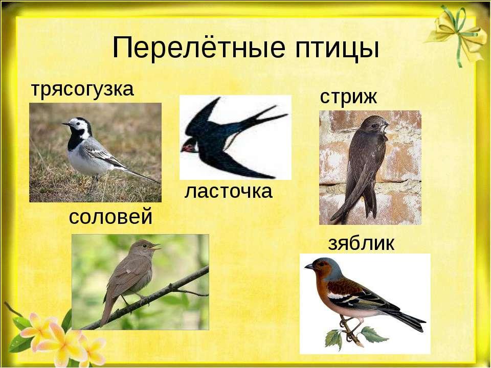 Перелётные птицы соловей трясогузка ласточка стриж зяблик