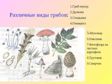 Различные виды грибов: 1.Гриб-мукор 2.Дрожжи 3.Спорынья 4.Пеницилл 5.Мухомор ...