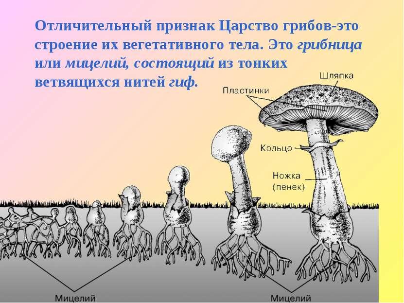 Отличительный признак Царство грибов-это строение их вегетативного тела. Это ...