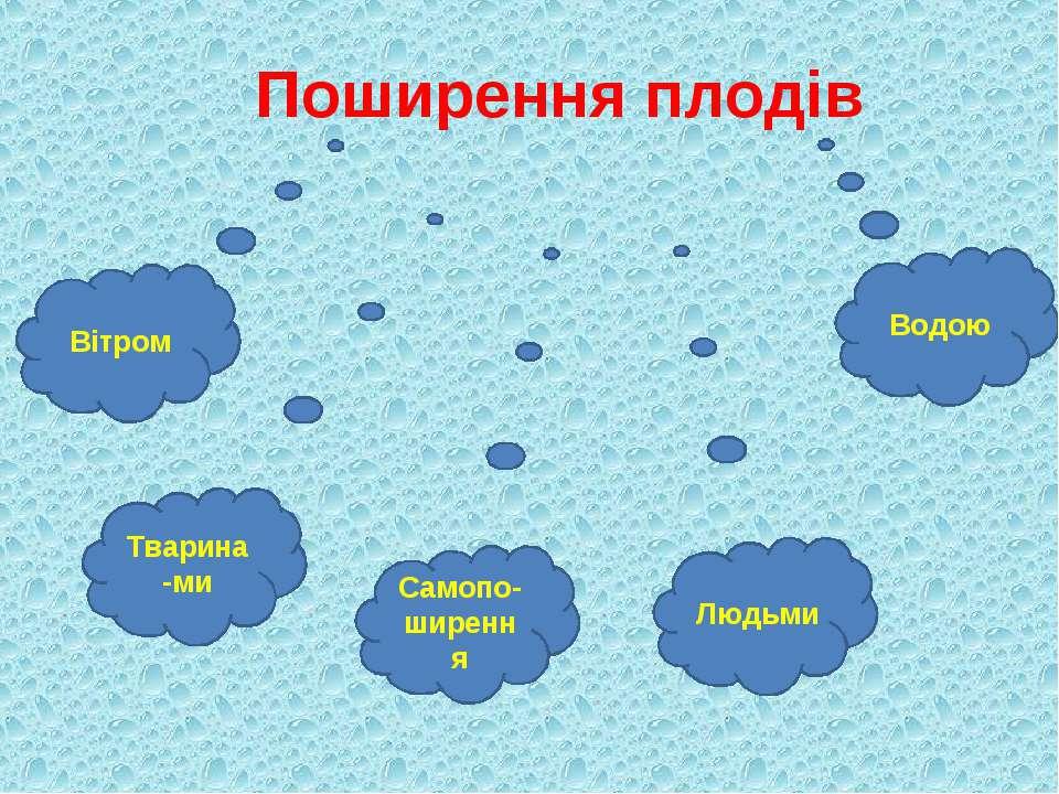 Поширення плодів Вітром Тварина-ми Самопо-ширення Людьми Водою
