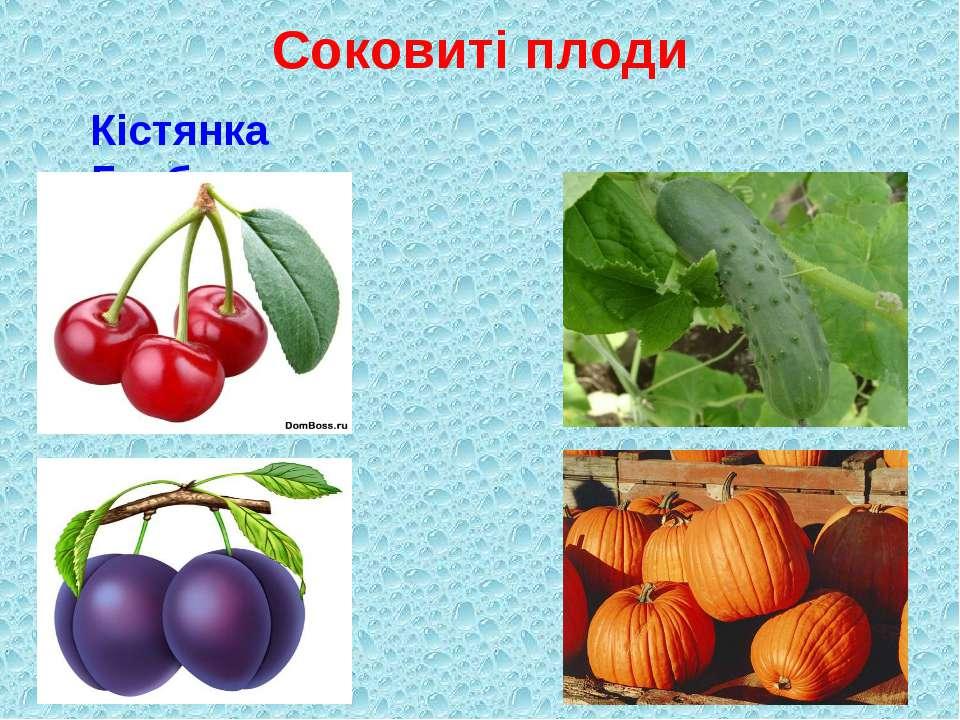 Соковиті плоди Кістянка Гарбузина