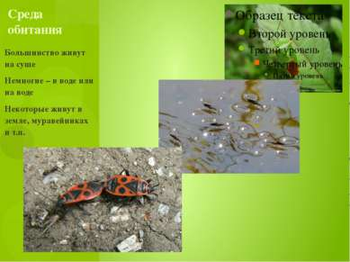 Большинство живут на суше Немногие – в воде или на воде Некоторые живут в зем...