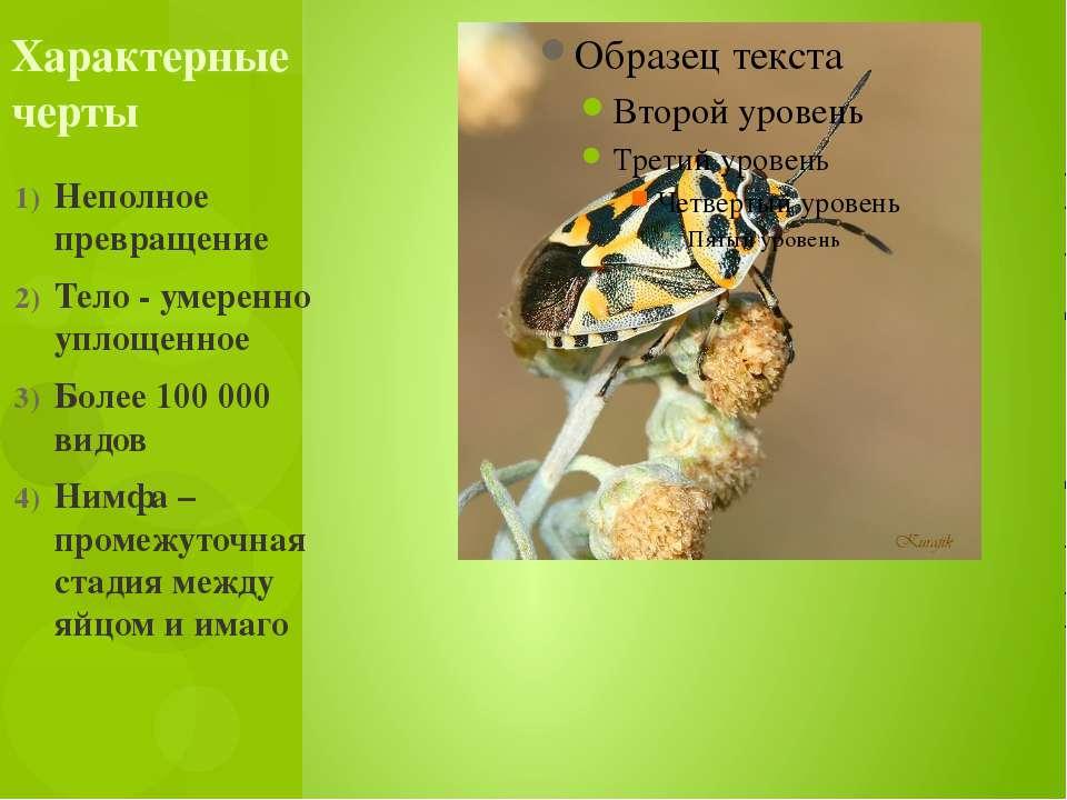 Неполное превращение Тело - умеренно уплощенное Более 100 000 видов Нимфа – п...