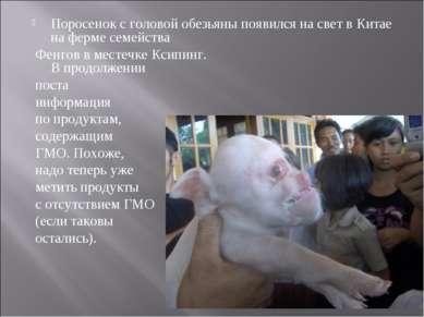 Поросенок с головой обезьяны появился на свет в Китае на ферме семейства Фенг...