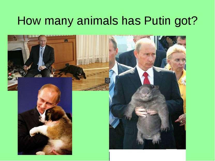 How many animals has Putin got?