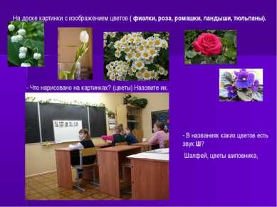 На доске картинки с изображением цветов ( фиалки, роза, ромашки, ландыши, тюл...