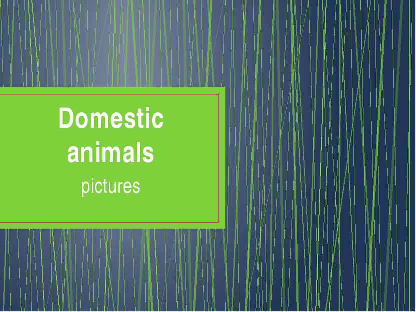 Domestic animals pictures