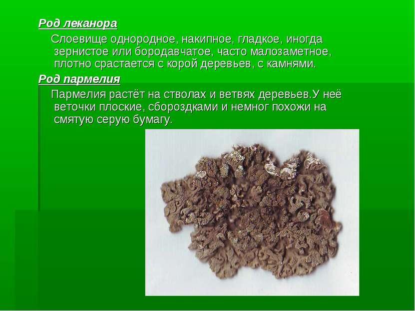 Род леканора Слоевище однородное, накипное, гладкое, иногда зернистое или бор...