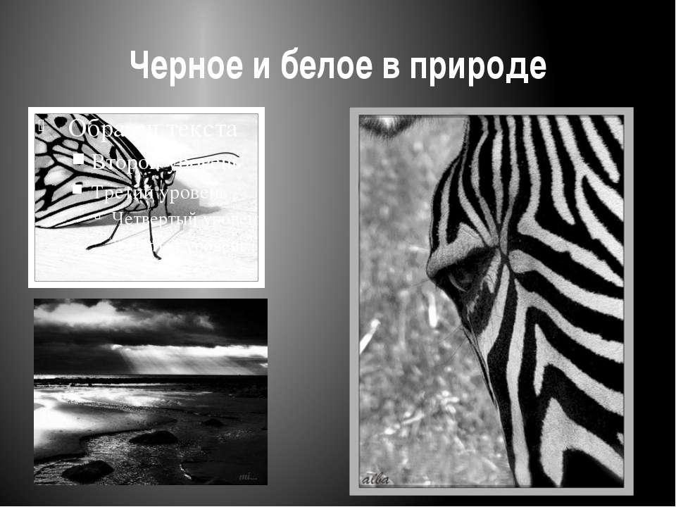 Черное и белое в природе