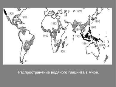 Распространение водяного гиацинта в мире.