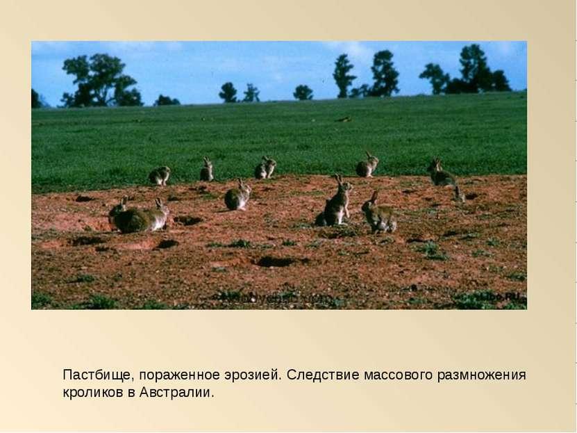 Пастбище, пораженное эрозией. Следствие массового размножения кроликов в Авст...