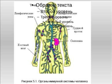 Иммунная система объединяет все органы и ткани, функцией которых является защ...