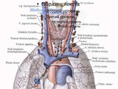 Шейные лимфатические узлы являются главными коллекторами лимфы, оттекающей от...