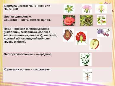 Формула цветка: Ч5Л5Т∞П∞ илиЧ5Л5Т∞П1 Цветки одиночные. Соцветие– кисть, зонт...