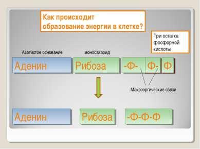 40 кДж 40 кДж Три остатка фосфорной кислоты Аденин Рибоза -Ф- Как происходит ...