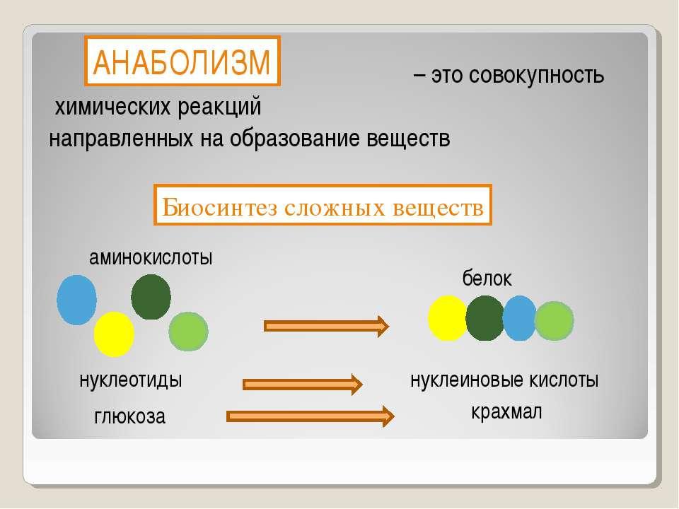 – это совокупность химических реакций направленных на образование веществ Био...
