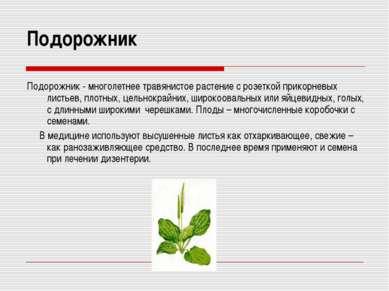 Подорожник Подорожник - многолетнее травянистое растение с розеткой прикорнев...