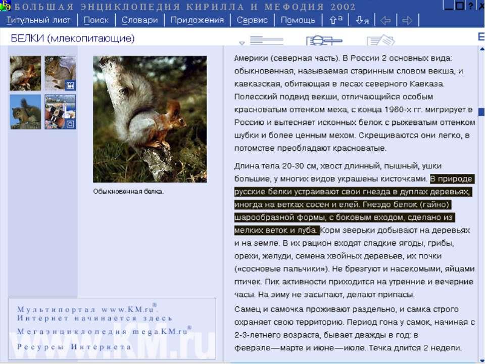 В природе русские белки устраивают свои гнезда в дуплах деревьев, иногда на в...