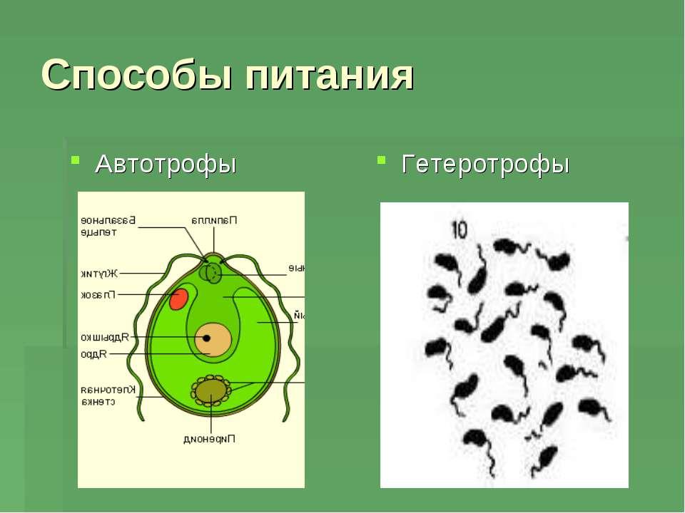 Способы питания Автотрофы Гетеротрофы