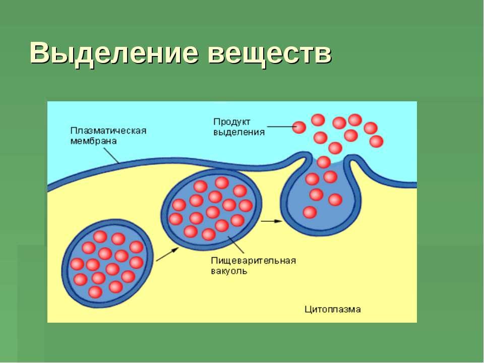 Выделение веществ