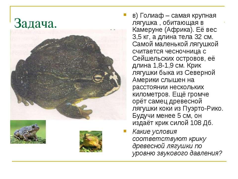 Задача. в) Голиаф – самая крупная лягушка , обитающая в Камеруне (Африка). Её...