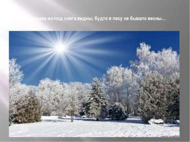 Ёлки едва из-под снега видны, будто в лесу не бывало весны…