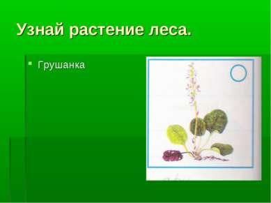 Узнай растение леса. Грушанка