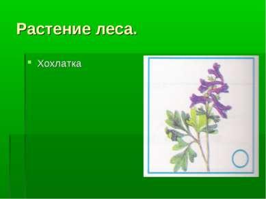 Растение леса. Хохлатка