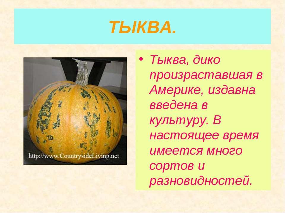 ТЫКВА. Тыква, дико произраставшая в Америке, издавна введена в культуру. В на...