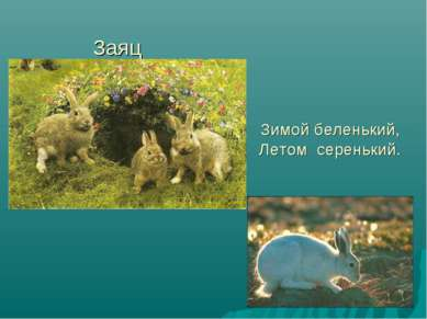 Заяц Зимой беленький, Летом серенький.