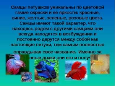Самцы петушков уникальны по цветовой гамме окраски и ее яркости: красные, син...