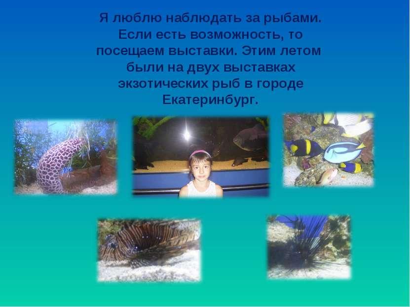 Я люблю наблюдать за рыбами. Если есть возможность, то посещаем выставки. Эти...