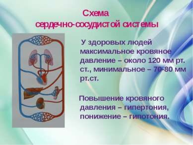 Схема сердечно-сосудистой системы У здоровых людей максимальное кровяное давл...