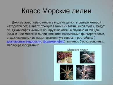 Класс Морские лилии Донные животные с телом в виде чашечки, в центре которой ...