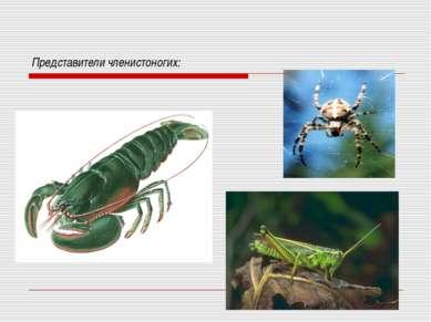 Представители членистоногих: