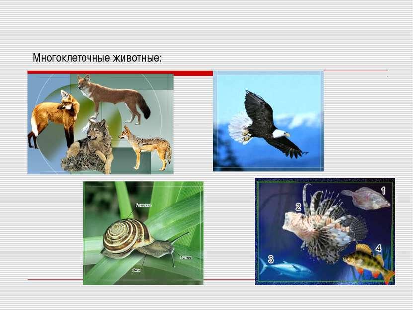 Многоклеточные животные: