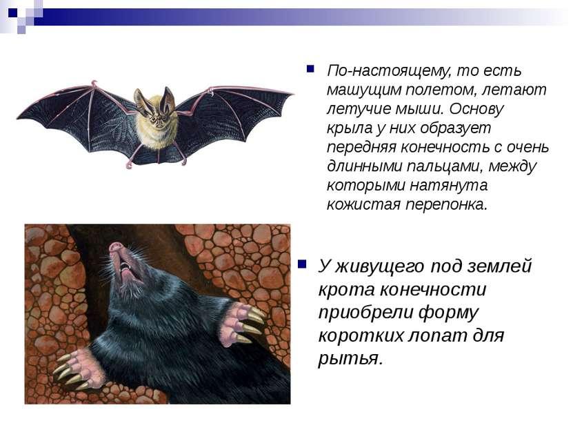 По-настоящему, то есть машущим полетом, летают летучие мыши. Основу крыла у н...