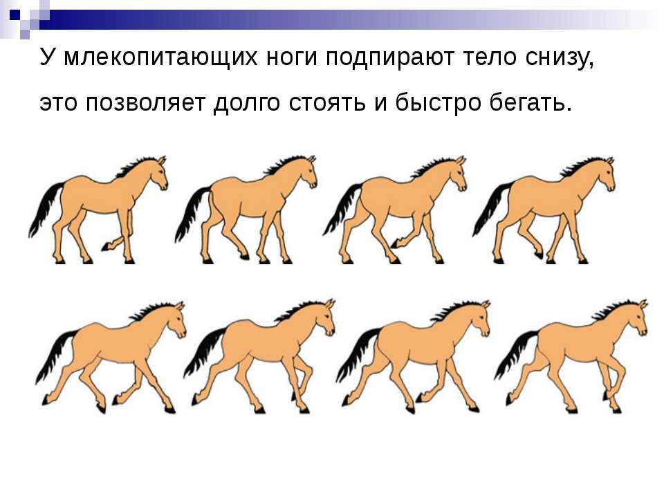 У млекопитающих ноги подпирают тело снизу, это позволяет долго стоять и быстр...