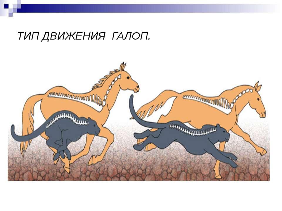 ТИП ДВИЖЕНИЯ ГАЛОП.