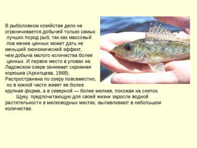 В рыболовном хозяйстве дело не ограничивается добычей только самых лучших пор...