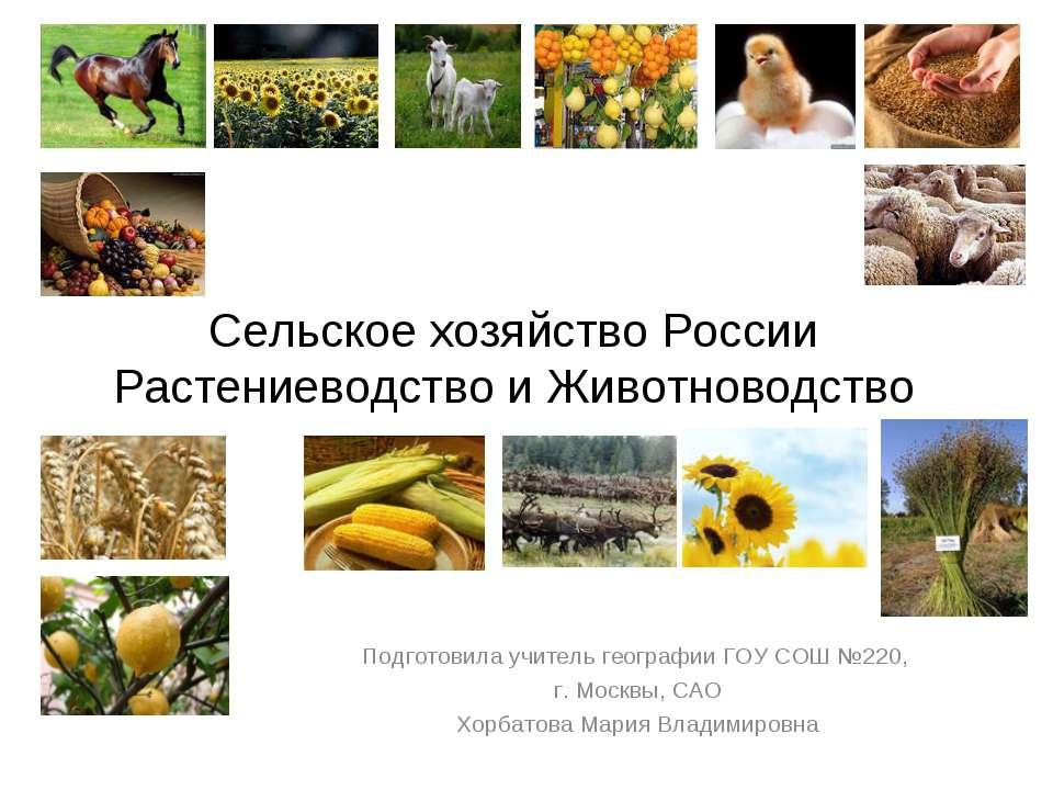 Сельское хозяйство России Растениеводство и Животноводство Подготовила учител...