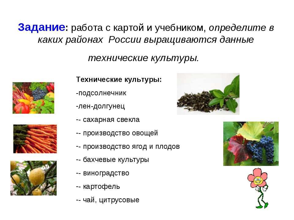 Задание: работа с картой и учебником, определите в каких районах России выращ...