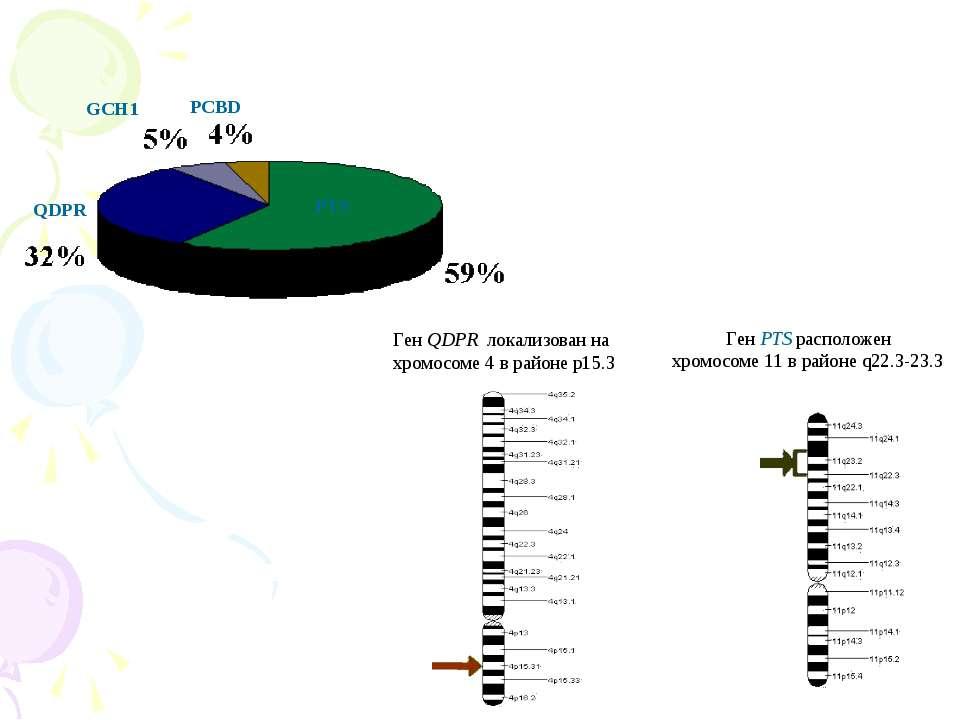 Ген QDPR локализован на хромосоме 4 в районе p15.3 Ген PTS расположен хромосо...