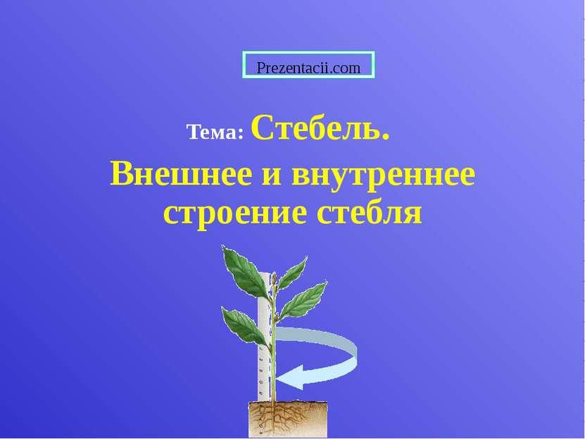Тема: Стебель. Внешнее и внутреннее строение стебля Prezentacii.com